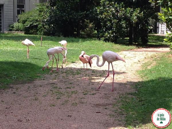 Os flamingos da casa da rua Cappuccini 9