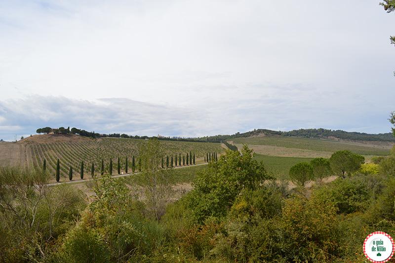 Turismo de Luxo na toscana Itália passeio pelas vinicolas da Toscana brunello di montalcino